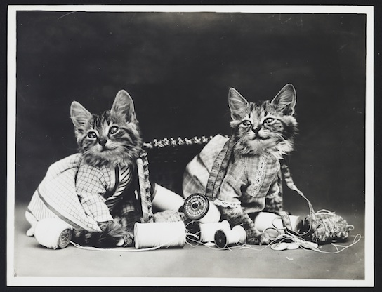 While these cats in this 1915 Henry Whittier Frees may feel superior to you, it's probably because they're cats, not because they're sewing.